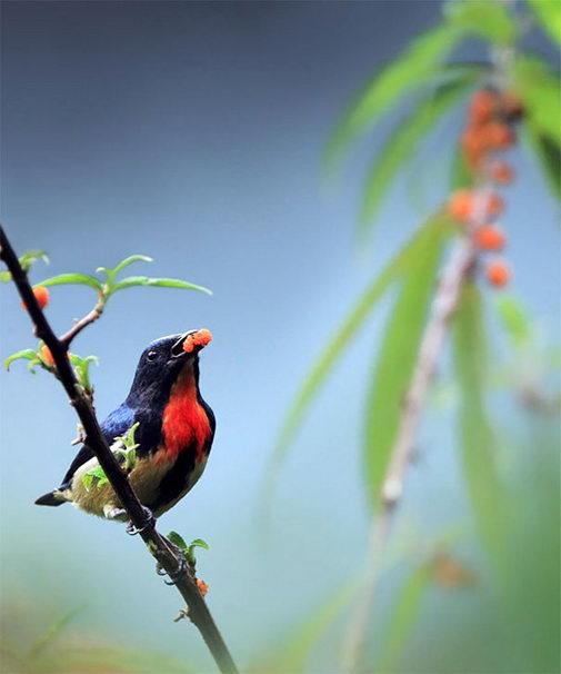 птицы8 (505x606, 34Kb)