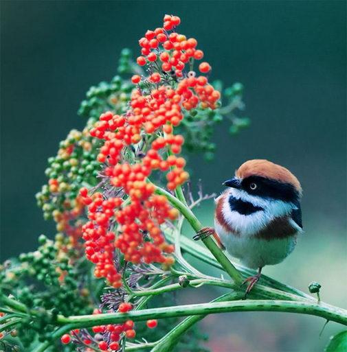 птицы10 (505x513, 53Kb)