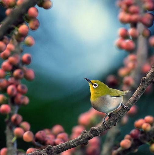 птицы14 (505x510, 38Kb)