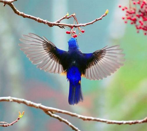 птицы16 (505x450, 32Kb)