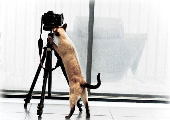 photographer (550x388, 34Kb)