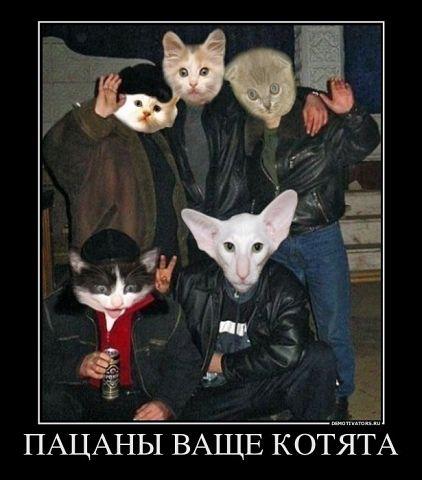 коты (422x480, 34Kb)