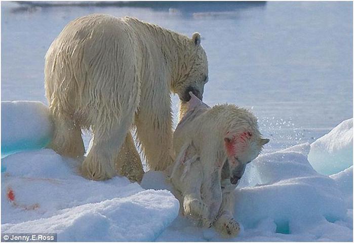 Каннибализм. Съеденный турист и полярные медведи
