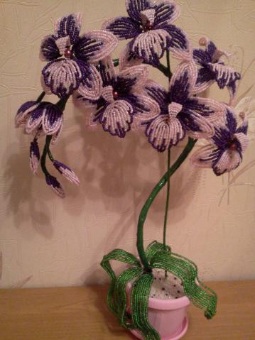 большой язычок орхидеи.