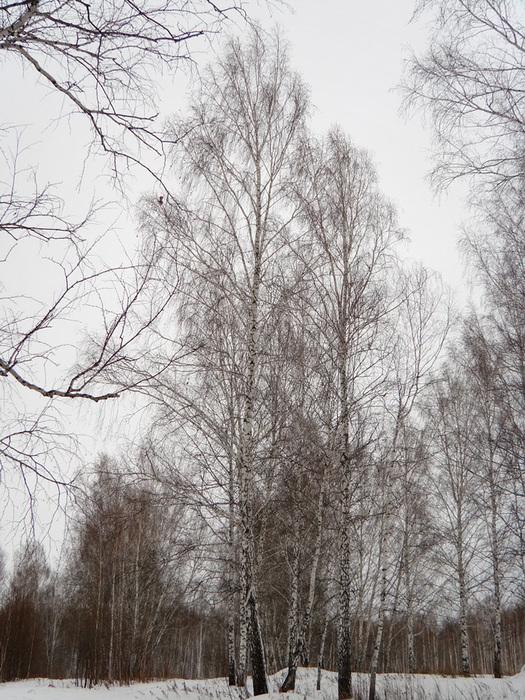 лес/1326120717_DSC00007 (525x700, 239Kb)