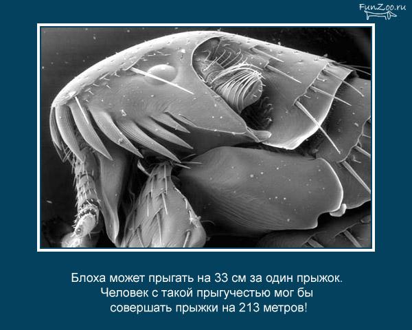 прикольные факты картинки 12 (600x480, 68Kb)