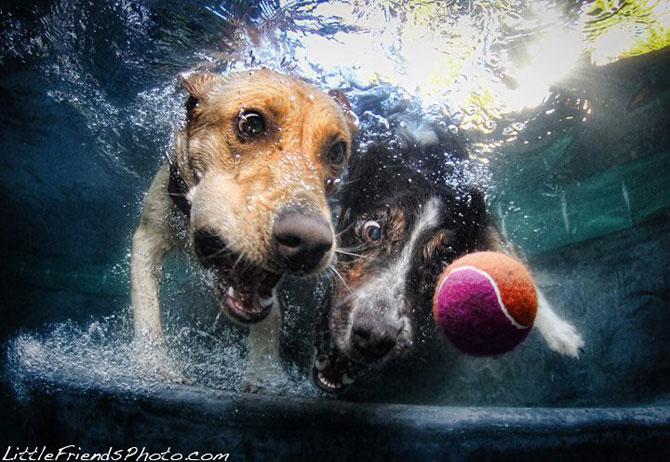 смешные собаки фото