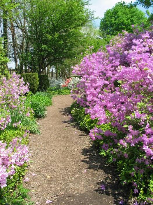 Ladew Topiary Gardens 85060