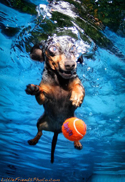 underwater-photos-of-dogs-seth-casteel-1 (414x600, 93Kb)
