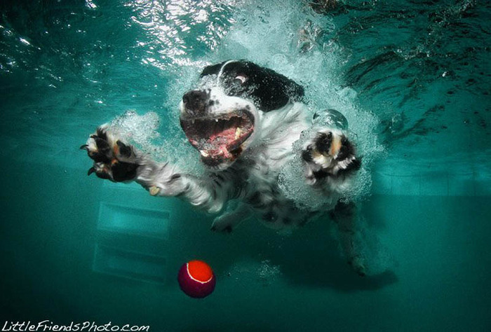 underwater-photos-of-dogs-seth-casteel-7 (700x474, 114Kb)