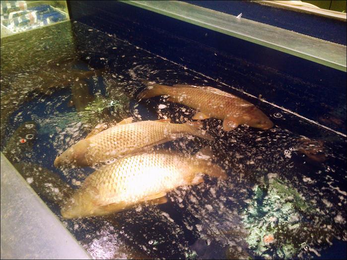 781011_7Cont_fish (700x525, 532Kb)