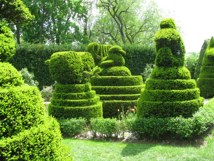 Ladew Topiary Gardens 62826