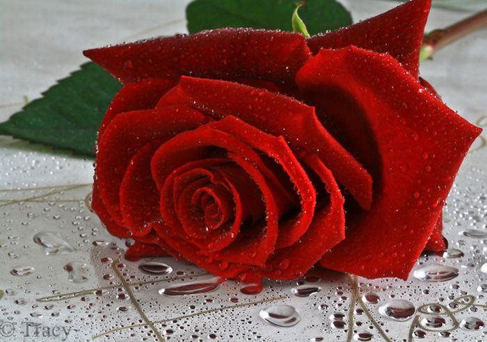 happy_valentines_29 (700x492, 74Kb)