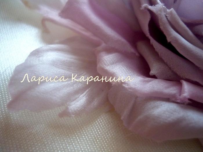 спектакль, роза жемчужная 073 (700x525, 240Kb)
