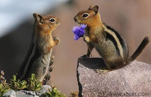 Позитивные фото животных 1 (500x322, 40Kb)