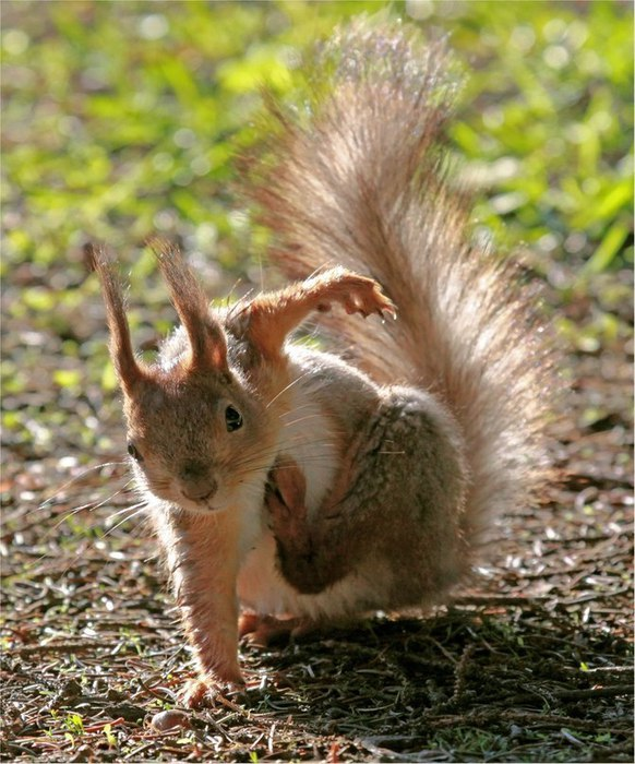 Позитивные фото животных 19 (582x700, 108Kb)