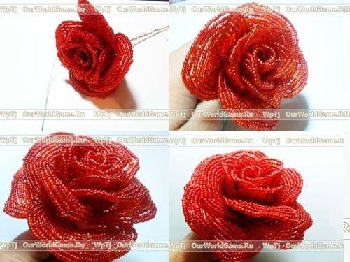 цветка бисерной розы.