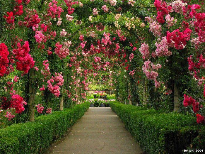 Арка в сад фото