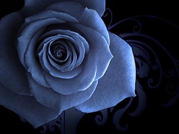 4080226_flowers119 (356x267, 15Kb)