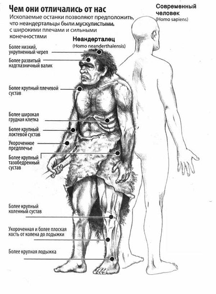 смешения неандертальцев с