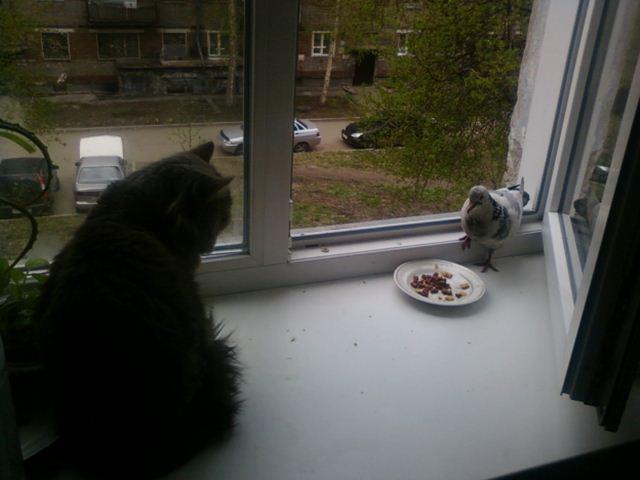 Фотографии котов (640x480, 34Kb)