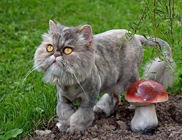 Фотографии котов 3 (640x494, 74Kb)