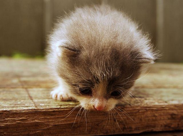 Фотографии котов 7 (640x476, 42Kb)