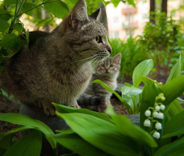 Фотографии котов 9 (640x544, 50Kb)