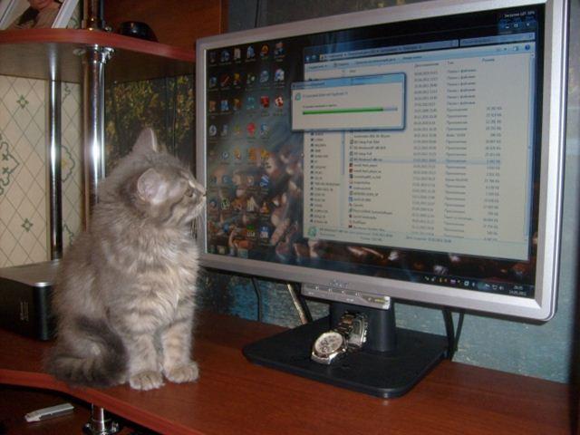 Фотографии котов 11 (640x480, 45Kb)