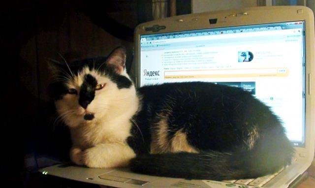 Фотографии котов 13 (640x382, 29Kb)