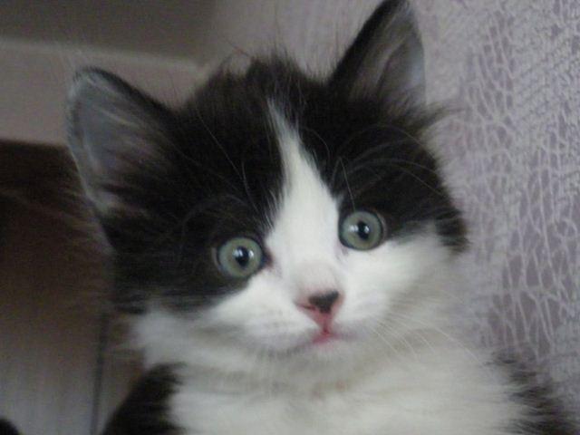 Фотографии котов 16 (640x480, 30Kb)