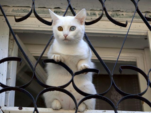 Фотографии котов 20 (640x480, 45Kb)