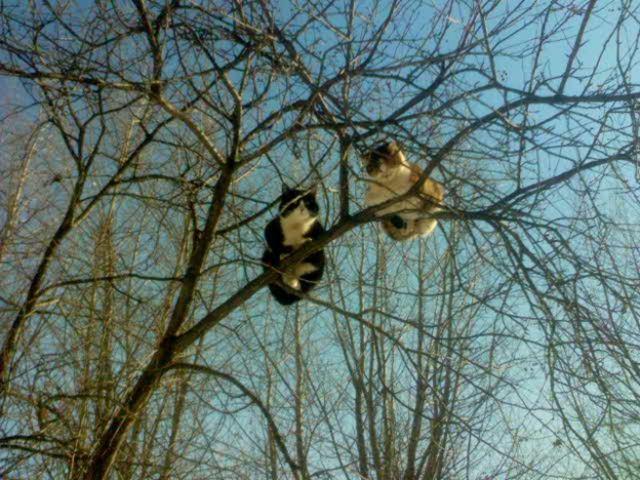 Фотографии котов 22 (640x480, 79Kb)