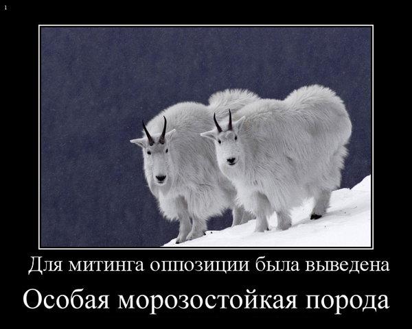 Новости 2012, интересно, лучшее, Алексей Навальный, перевыборы, голов, революция, митинг, протест,/4809619_s640x480_93_1_ (600x480, 46Kb)