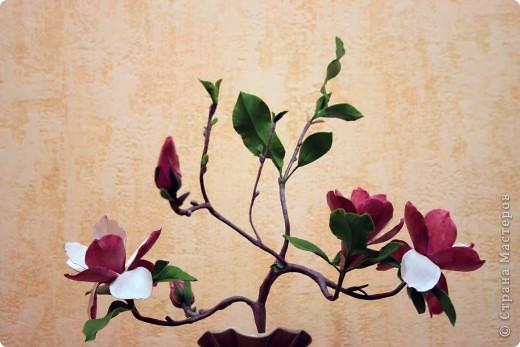 magnolia_3 (520x347, 47Kb)