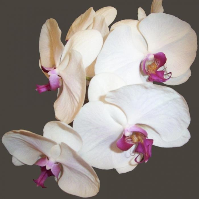 экзотические цветы названия и фото