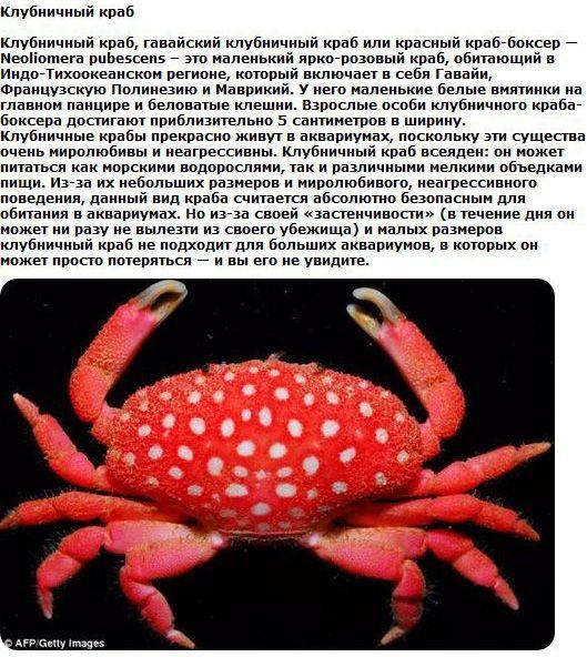 1329110896_animals_25 (529x592, 96Kb)