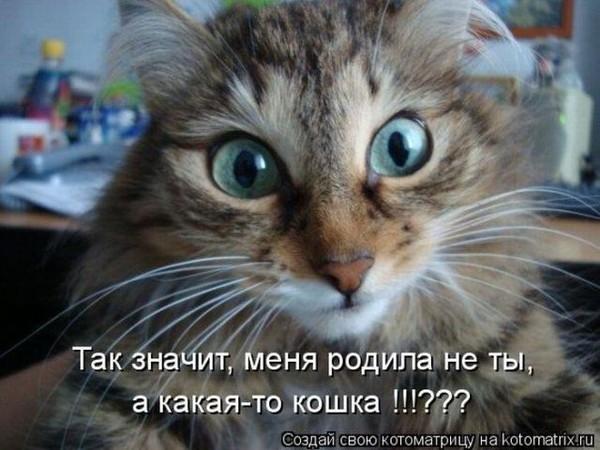 кот меня родила не ты (600x450, 71Kb)