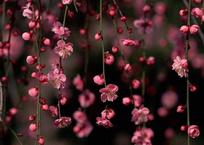 Весна природа красивая 4 (700x496, 40Kb)