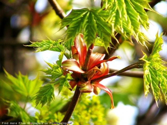 Весна природа красивая 6 (700x525, 121Kb)