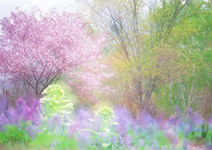 Весна природа красивая 8 (700x496, 140Kb)