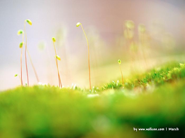 Весна природа красивая 13 (700x525, 92Kb)