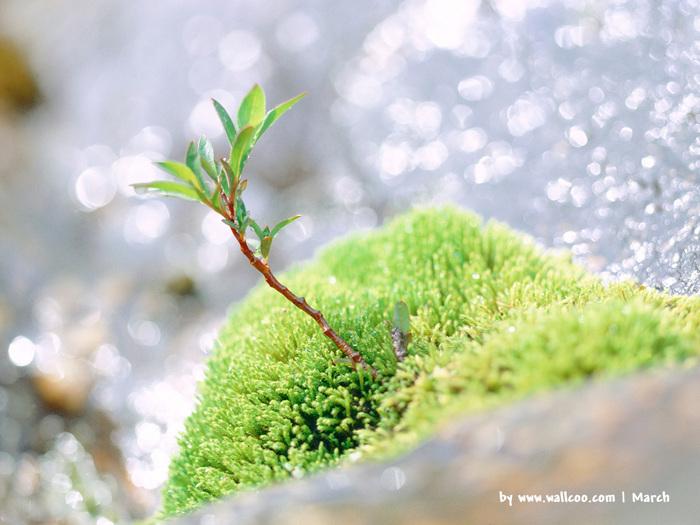 Весна природа красивая 15 (700x525, 143Kb)
