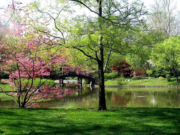Весна природа красивая 29 (700x525, 296Kb)