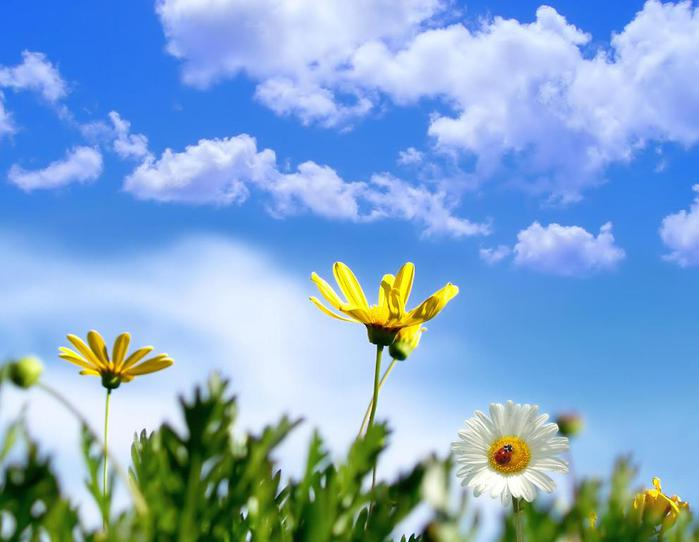 Весна природа красивая 32 (700x542, 38Kb)