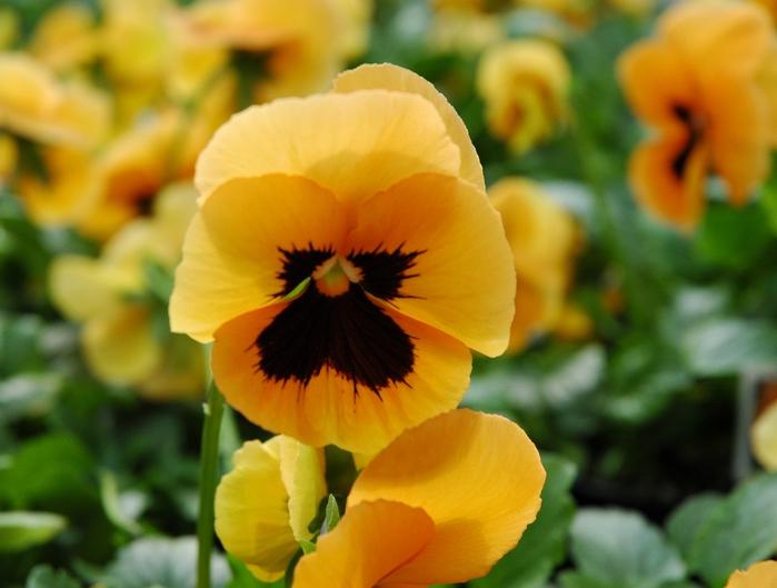 Весна природа красивая 34 (700x529, 196Kb)