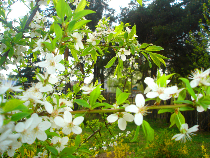 Весна природа красивая 36 (700x525, 635Kb)