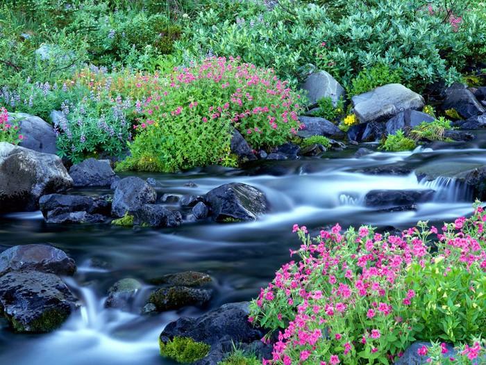 Весна природа красивая 50 (700x525, 184Kb)