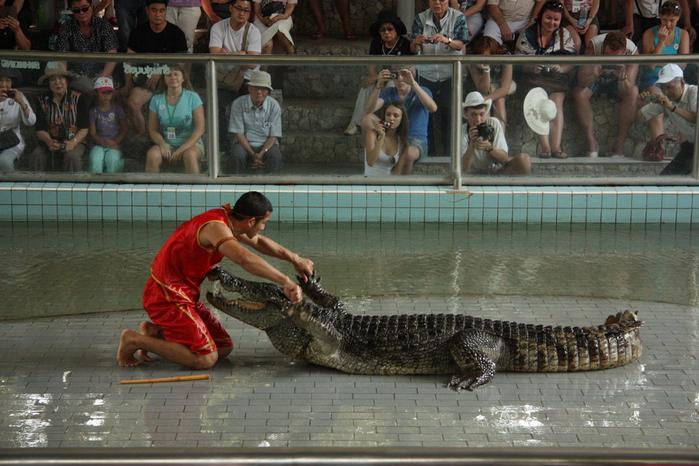 Thailand-Pattaya-Crocodile farm-2012-Изображение 277 (700x466, 259Kb)