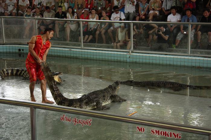 Thailand-Pattaya-Crocodile farm-2012-Изображение 254 (700x466, 262Kb)